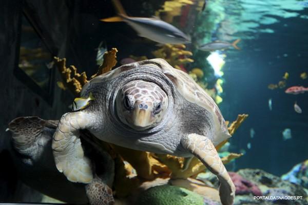 Tartarugas marinhas. A viagem.